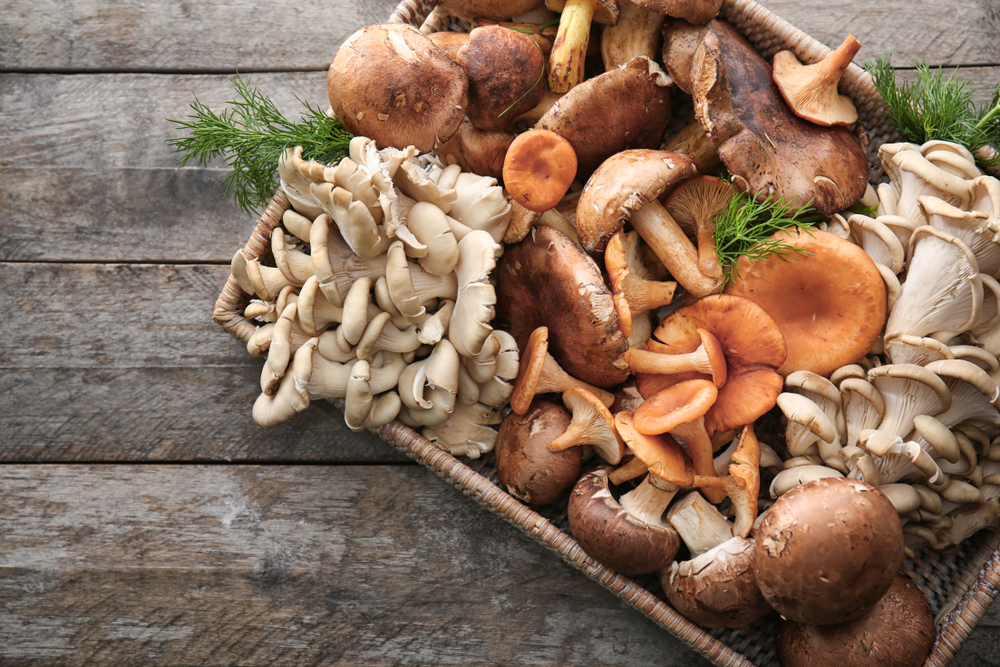 7 Reasons Why Medical Mushrooms are Good for you