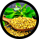 Fenugreek: Male UltraCore Ingredient